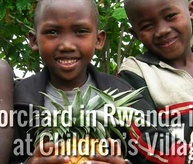 The largest orchard in Rwanda
